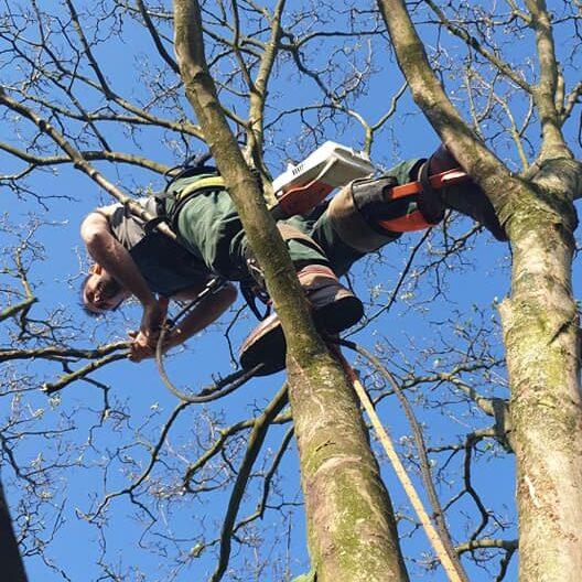 Vakkundig en verantwoord snoeien van bomen